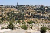 Kudüs'ün duvarlarından zeytin Dağı. — Stok fotoğraf