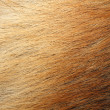 Animal skin — Stock Photo