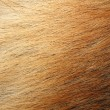Stock Photo: Animal skin