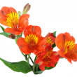 Stock Photo: Orange flowers and green leaf