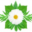Stock Photo: White flower with green leaf