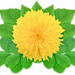 Stock Photo: Yellow flower with green leaf