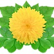 Yellow flower with green leaf — Stock Photo