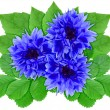 Blue flowers with green leaf — Stockfoto