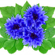 Blue flowers with green leaf — Stock fotografie