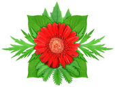 Red flower with green leaf — Stock Photo