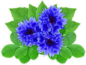 Blue flowers with green leaf — Stock Photo