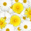 Stock Photo: Background of yellow and white flowers