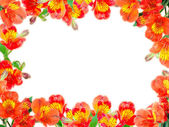 Floral frame with orange flowers and green leaf — Stock Photo