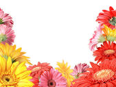 Floral πλαίσιο με ετερόκλητο λουλούδια — Φωτογραφία Αρχείου