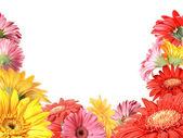 用各色鲜花花卉帧 — 图库照片