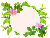 Frame with pink dog-rose flowers — Stock Photo