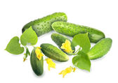 Green cucumbers with leaf and yellow flowers — Stock Photo