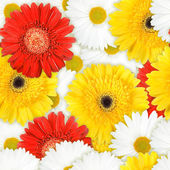 Seamless background of motley flowers — Stock Photo