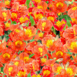 Seamless pattern of orange lily flowers — Stock Photo
