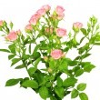 Bouquet of pink roses with green leafes — Stock Photo