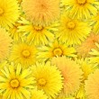 Stock Photo: Abstract background of yelow flowers