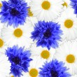 Stock Photo: Background of blue and white flowers