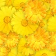 Stock Photo: Background of orange and yellow wet flowers