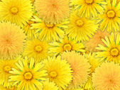 Abstract background of yelow flowers — Stock Photo