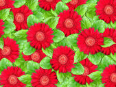 Background of red flowers and green leaf — Stock Photo