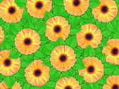 Background of orange flowers and green leaf — Stock Photo