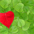 Abstract Valentine background with leaf — Stock Photo