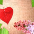 Valentine background with flowers and leaf — Stock Photo