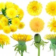 Set of yellow dandelion-flowers — Stock Photo