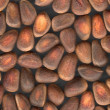 Nuts of Siberian Cedar Pine - Foto de Stock  