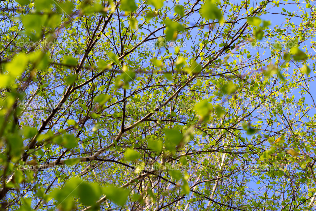 Leaves on branches of a tree against sky — Stock Photo #9026239