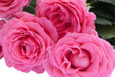 Bouquet of roses. Close-up view — Stok fotoğraf