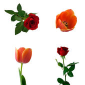 Set of roses and tulips — Stock Photo
