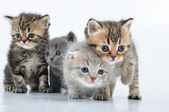 Group of little kittens — Stock Photo