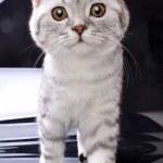 Kitten cat walking towards against black and white background — Stock Photo