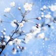 Apple tree with flowers under blue skies. — Stock Photo