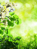 Abstract summer backgrounds with green grass and bokeh — Stock Photo