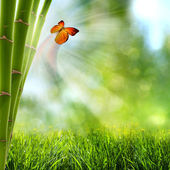 Abstract summer backgrounds with bamboo forest and butterfly — Stock Photo