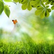 Stock Photo: Abstract spring and summer backgrounds