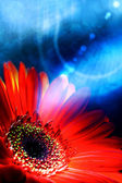 Abstract summer backgrounds with gerbera flower — Stock Photo