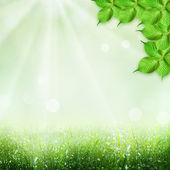 Abstract spring and summer backgrounds — Stock Photo