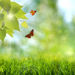 Summer time. abstract optimistic backgrounds with flying butterf — Stock Photo