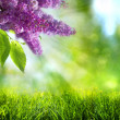 Abstract summer and spring backgrounds — Stock Photo