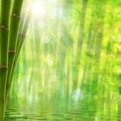 Bamboo forest. Abstract summer backgrounds with bright sun and b — Stock Photo