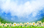 Green field with daisy flowers — Stock Photo