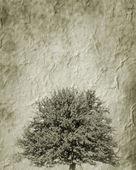 Un albero — Foto Stock