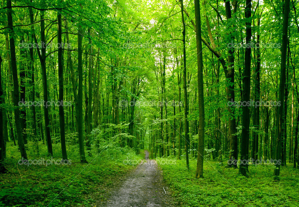 Forest trees. nature green wood sunlight backgrounds ...