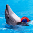 Stock Photo: Dolphin playing with ball in blue water