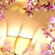 Orchid and champagne — Stock Photo #10445458