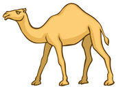 Camel — Stock Vector